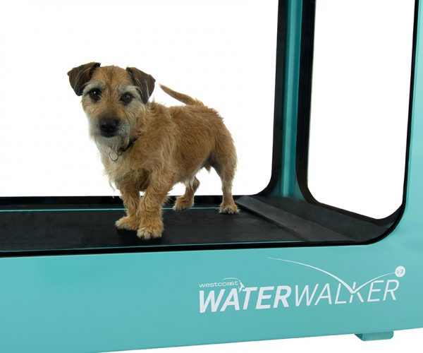 Dogs will love exercising in our underwater treadmill