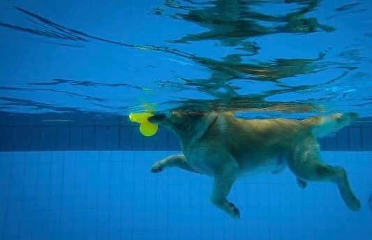 Underwater Camera - Veterinary Hydrotherapy Pools - Westcoast Hydrotherapy